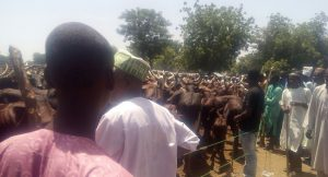 We've Lost 6,000 Cows In Southern Kaduna Violence – Miyetti Allah