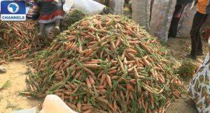 farming-carrot