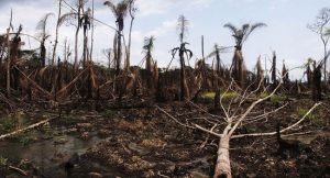 environment degradation in Nigeria by Governor Ahmed