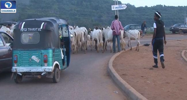 cattle-in-abuja