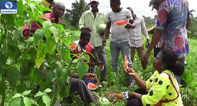 bakassi-idps-farming-water-melon