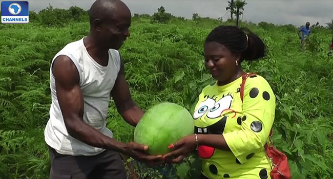 Farming Becoming Money Earner For Bakassi IDPs
