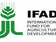 Ogun Govt. Partners IFAD On Cassava, Rice Production