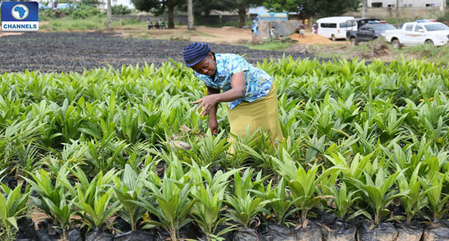 Abia State Govt. Private Investor In Huge Palm Production Agreement