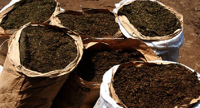 NDLEA Seizes Four Tonnes Of Cannabis In Benue