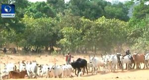Nine Persons Killed By Herdsmen In Benue After Ban On Grazing Buried