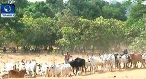 Herdsmen: No Free Land For Grazing In Edo, Says Obaseki
