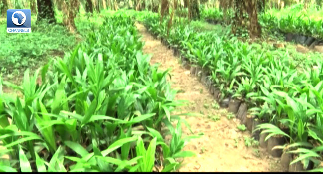 More Nigeria Women Take Up Farming, Invest In Technology