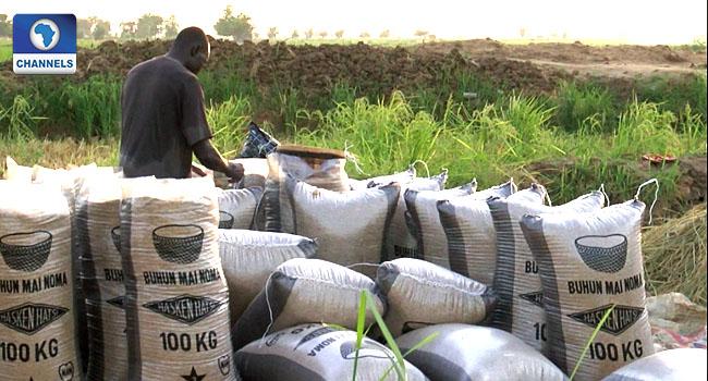 Nigeria Has Saved $600m From Rice Importation – BOA