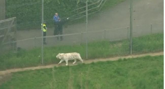 Zookeeper Dies In British Zoo