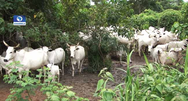 Fulani Youths Protest Anti-Grazing Law In Benue, Taraba