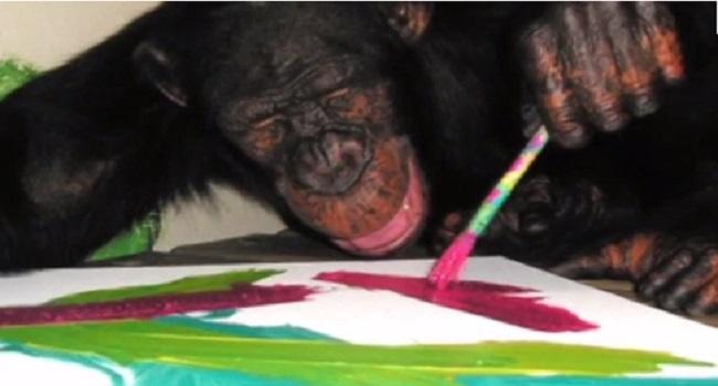 Michael Jackson's Pet Chimp Bubbles Stars In Miami Art Show