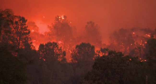 Wildfire Ravages Forest, Buildings In Southern France