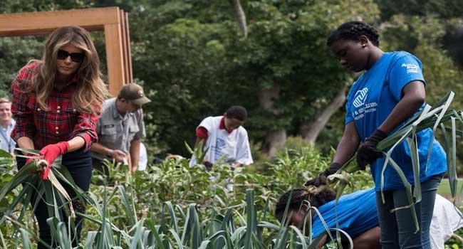 Melania Trump Harvests Michelle Obama's Vegetable Garden