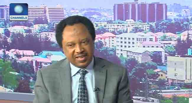 Shehu Sani Raises Concerns Over Buhari's Comments On Ballot Snatching