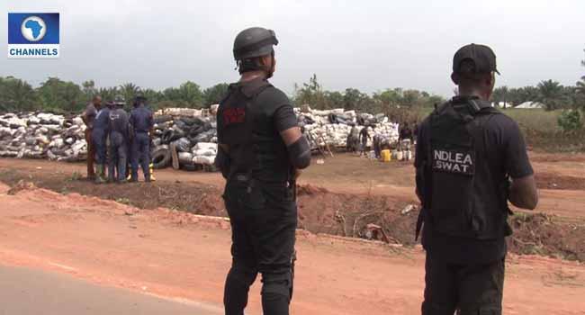 NDLEA Destroys Over 130,000KG Drug Exhibits In Edo