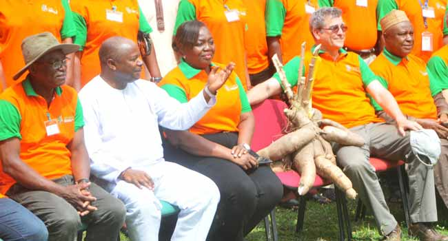 Sustainable Cassava Seed Systems Critical To Food Security – IITA
