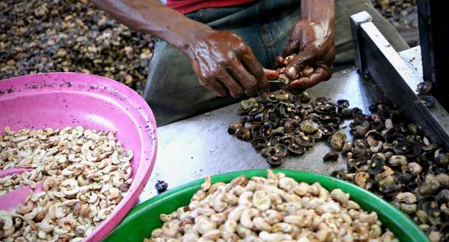 Mozambique Cracks Open Its Cashews To Boost The Economy