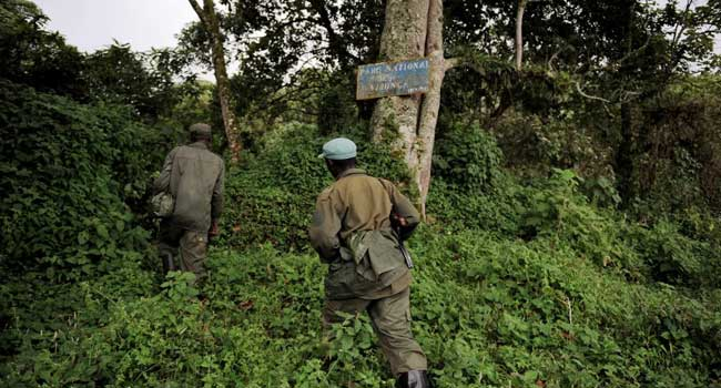 DR Congo Park Suspends Tourism Activities After Kidnapping, Murder