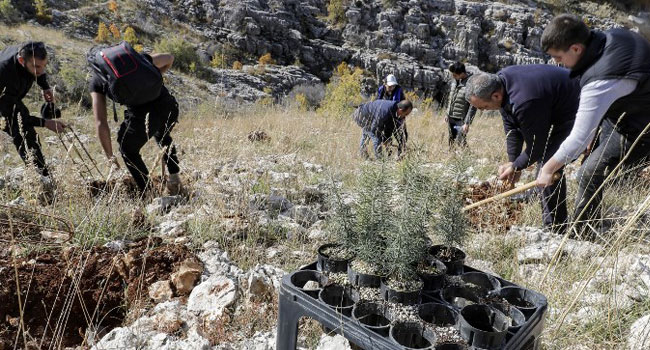 Climate Change Devours Ancient Cedar Trees In Lebanon