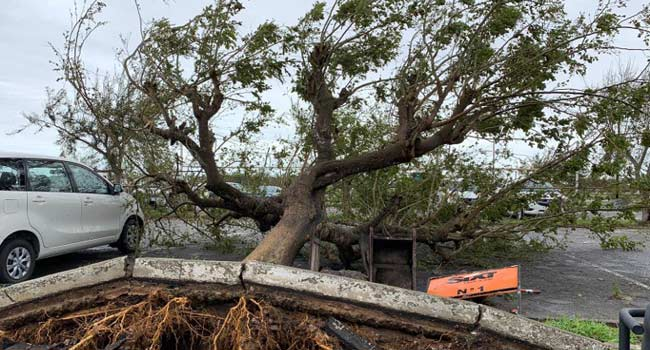 Over 160 Dead In Zimbabwe, Mozambique As Cyclone Destroys City