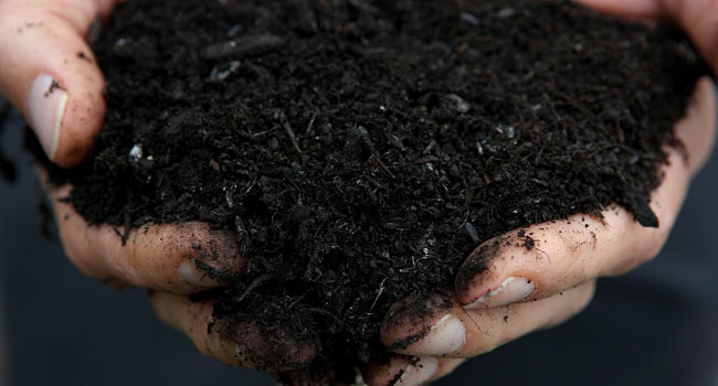 Eco-Friendly Burial: Washington Becomes First US State To Legalise Human Composting