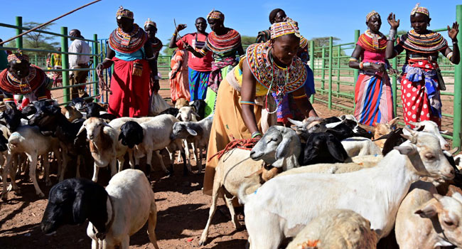 Tradition Meets Tech As Kenya's Herders Adapt To Climate Change