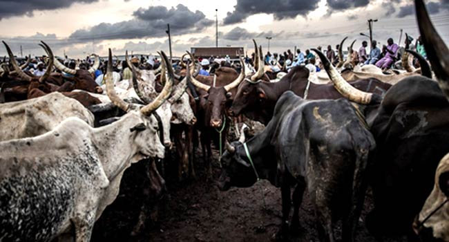 Ondo Govt Will Reject Money To Trace Grazing Routes – Governor Akeredolu