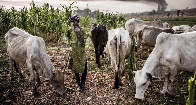 No Land Has Been Gazetted For Ruga Settlements, Says Benue Govt