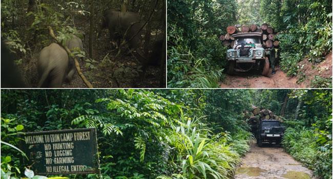Elephants: The Jumbo Surprise Outside Nigeria's Megacity
