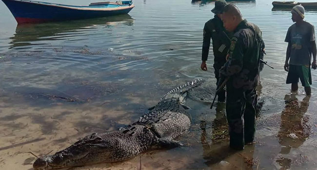 Huge Saltwater Croc Kills Fisherman In Latest Attack On Philippine Island