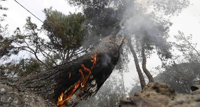 Lebanon Asks Neighbours For Help To Fight Forest Fires
