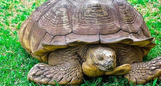 344-Year-Old Tortoise Dies In Ogbomoso