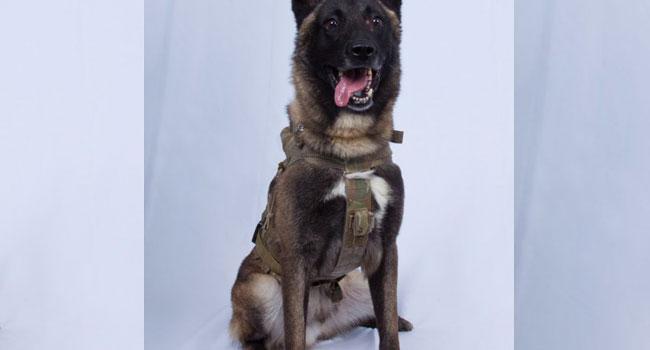 Trump Lauds Dog For 'Great Job' In Capturing, Killing ISIS Leader Al-Baghdadi