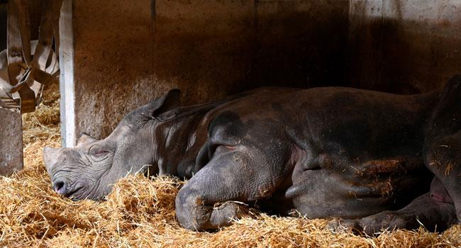 'World's Oldest' Rhinoceros Dies At 57