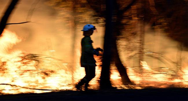 Doctors Say Sydney Bushfire Haze A 'Public Health Emergency'