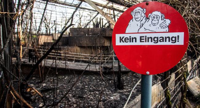 Dozens Of Monkeys Die In German Zoo New Year's Eve Fire