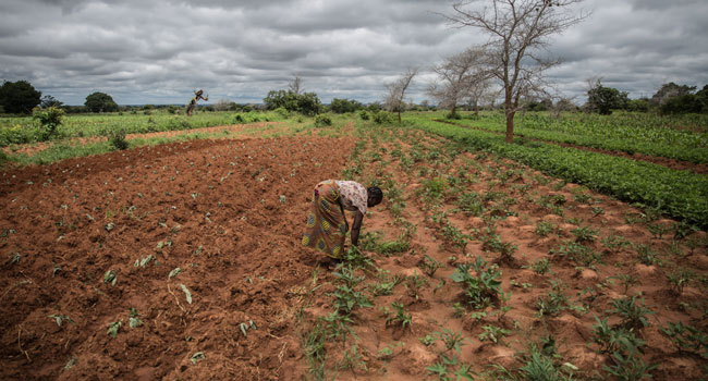 Hunger Stalks Southern Africa As Climate Crisis Deepens