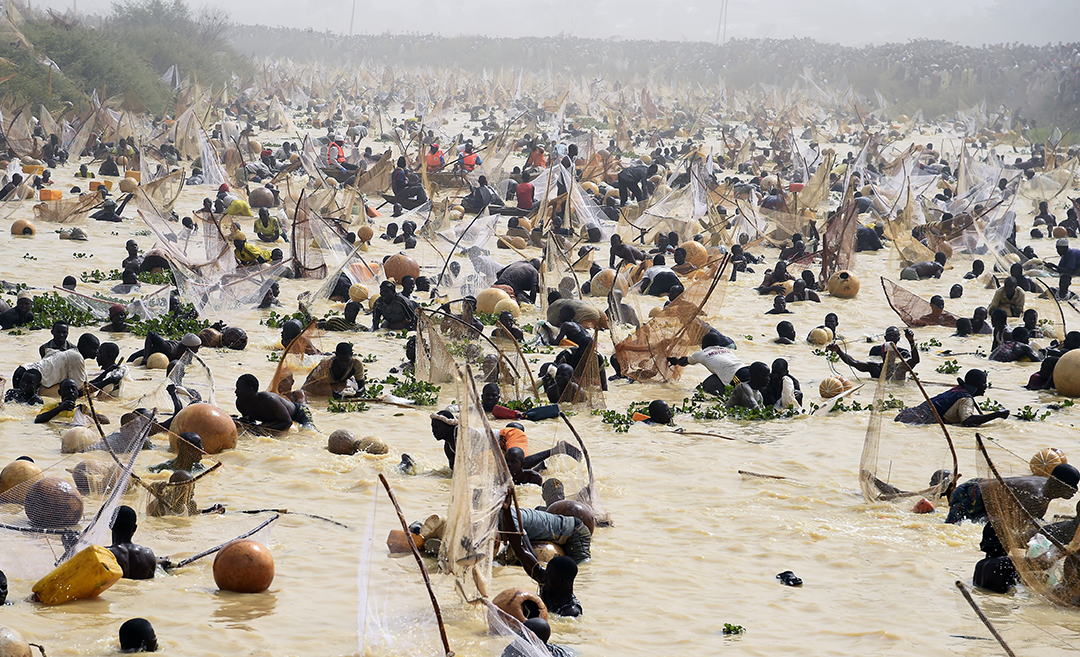 Fishermen try to catch fishes during the final of the revived Argungu fishing and cultural festival at Argungu Town, Kebbi State in northwest Nigeria, on March 14, 2020. - Argungu fishing and cultural festival is one of the oldest and most widely attended festivals in the country dating back many generations, featuring series of water competitions and traditional games. The festival returned after 10 years suspension due to insecurity in northwest Nigeria. Photo: AFP
