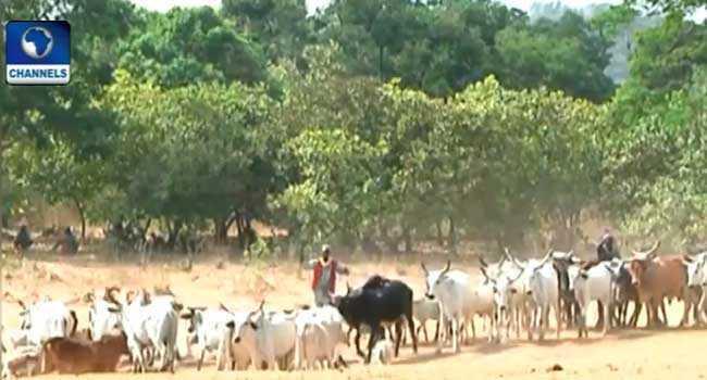 Delta Community Issues Quit Notice To Herdsmen
