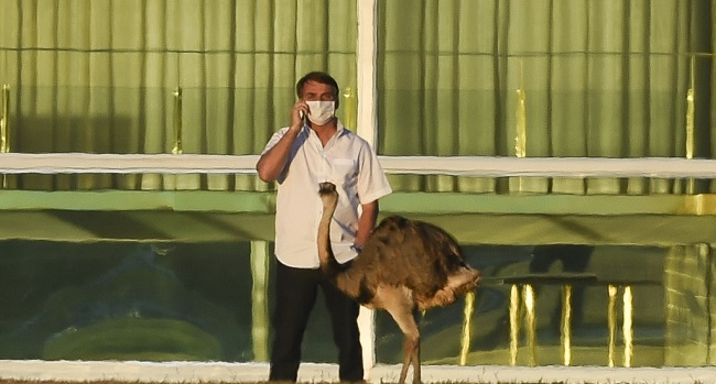 Brazilian President Jair Bolsonaro speaks on a mobile phone next to an emu outside the Alvorada Palace in Brasilia, Brazil, on July 13, 2020, in the midst of the new COVID-19 coronavirus pandemic. - Bolsonaro tested positive for the coronavirus on July 7, after months minimizing the dangers of the disease. (Photo by Sergio LIMA / AFP)