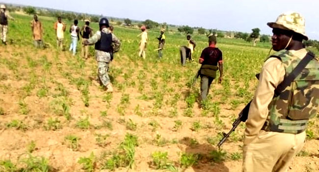 Troops Kill Three Bandits, Recover Over 500 Livestock