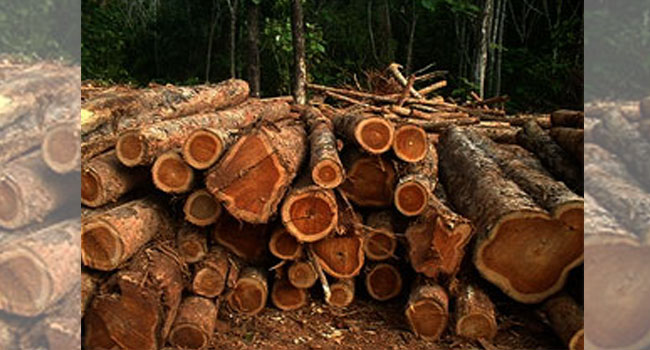 Sokoto To Plant Two Million Trees To Fight Desertification