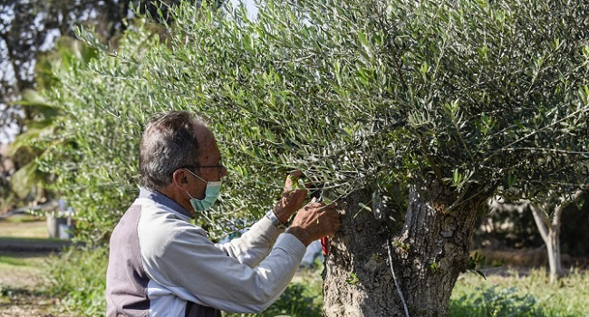 Cyprus Olive Farmer Vows Change To Face Climate Challenge