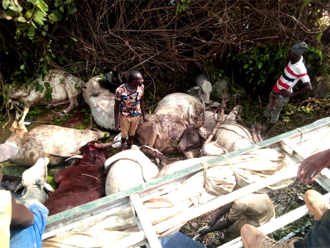 At least 23 people have been killed in a road crash around Masha village along the Makera-Mokwa Road in Mashegu