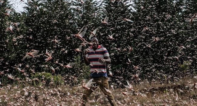Kenya's Locust Hunters On Tireless Quest To Halt Ancient Pest