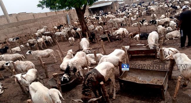 Eid-El-Kabir: Buyers Desert Katsina Ram Markets Due To Price Increase