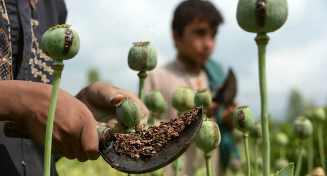 Taliban Leaders Vow To Ban Heroin, But Can They Survive Without It?