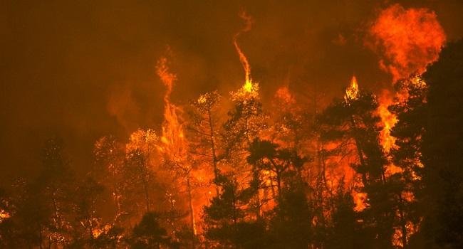 Hundreds Flee, Homes Destroyed As Forest Fires Ravage Greek Island